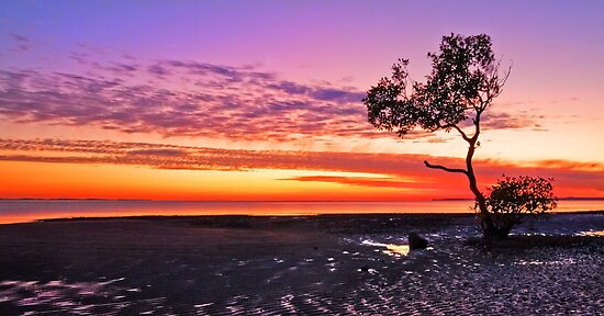 Sunrise on that Tree - Wellington Point Qld by Beth  Wode