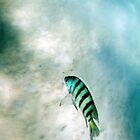 Zebra fish on Chalkie's Beach by Steve Munro