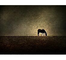 Hilltop Grazing Photographic Print