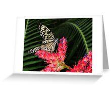 Beautiful Tree Nymph Greeting Card
