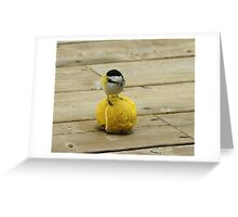 Gathering nesting material Greeting Card