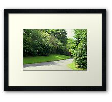 A Pathway Of Trees  Framed Print
