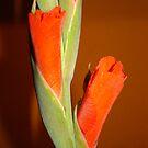 Orange by RedFlavourArt