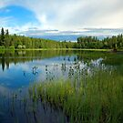 Angling pond by ilpo laurila