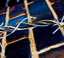 Barbed Wire by Brad Walsh