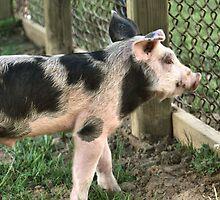 ~ Pork Chop ~ by love2shoot