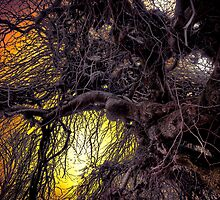 That Old Tree by Charles & Patricia   Harkins ~ Picture Oregon
