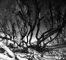The unsettling... by Matthew Larsen