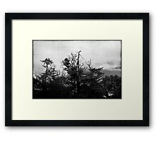 Nature in black and white VIII Framed Print
