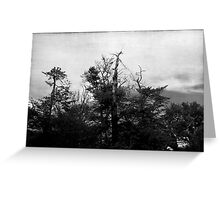 Nature in black and white VIII Greeting Card