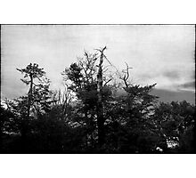 Nature in black and white VIII Photographic Print