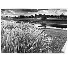Grasses beside the river Great Ouse in summer Poster