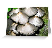 common ink cap fungi Greeting Card