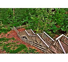 Stairway to a Mountain Forest Photographic Print
