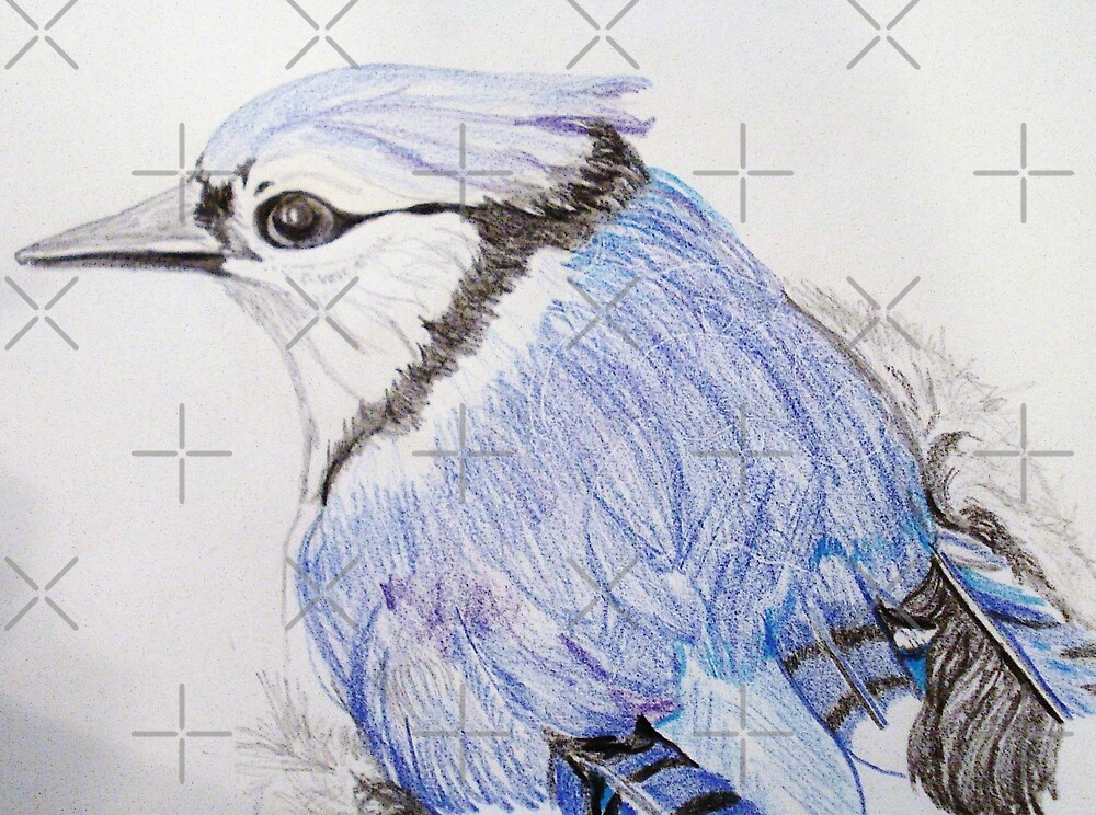 Bluejay Study  by JRobinWhitley