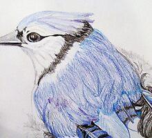 Bluejay Study  by JRobinWhitley