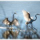 Egrets  by Saija  Lehtonen