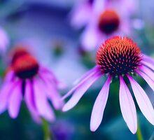 Purple Cones by David  Guidas