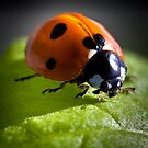 Ladybug in the light by Jérôme Le Dorze