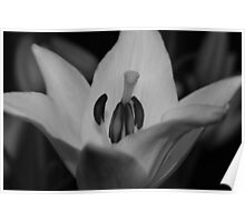 Beauty in Black and White Poster