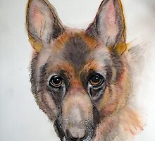 German Shepherd by Heidi Mooney-Hill