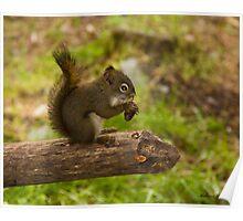 Munch'en Squirrel - Girdwood Alaska Poster