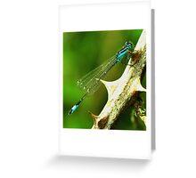 Blue-tailed Damselfly  Greeting Card