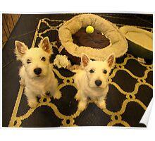 Westie Pups Poster
