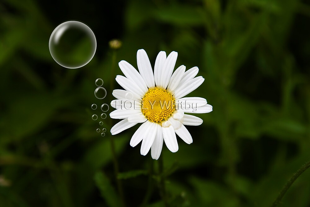 Daisy in a Bubble by Elaine123