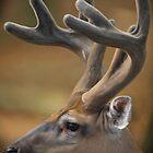 Oh Deer! by Joe Jennelle
