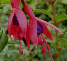 Fusia by ElsT