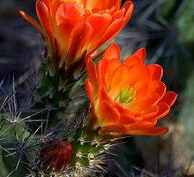 """ Desert Color "" by Diana Graves Photography"