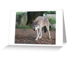 Mean Looking Timber Wolf Greeting Card