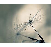 cradle Photographic Print