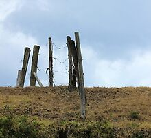 Barbed Wire Fence on a Hill by rhamm
