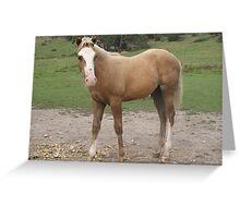 Skyhorse Dawn Aurora Greeting Card