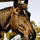 Big horse, big hat, little girl by Anthea Bennett