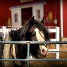 Hippie Horse by Monica M. Scanlan