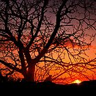Tree against sunset by Cleber Design Photo
