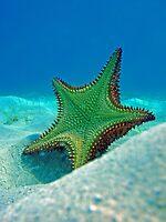 Starfish by Leon Heyns