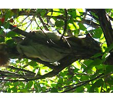 Tree hammock Photographic Print