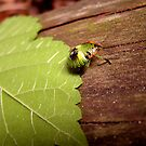 Weird and Green Bug by njumer