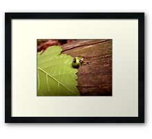 Weird and Green Bug Framed Print