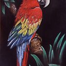 Scarlet Macaw by Felicity Deverell