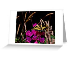 The Big Coverup  ~ Western Tiger Swallowtail Butterfly ~ Greeting Card