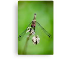 Female Blue Dasher Dragonfly Canvas Print