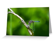 Male Blue Dasher Dragonfly Greeting Card