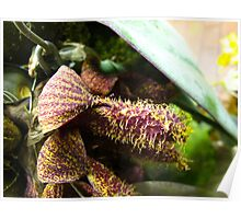 The Avante Garde Orchid Poster
