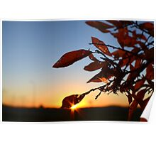 Sunrise in the leaves Poster