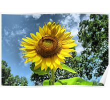 You Are My Sunshine ~ Make-A-Wish-Sunflowers Poster